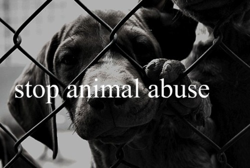 The Falcon's Flyer : Animal Abuse