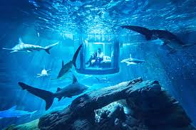 A Sleepover With Sharks