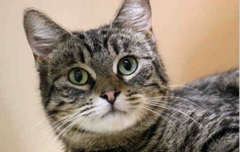 Pet of the Week- Dorothy the Cat