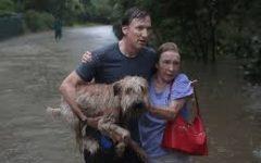 Pets From Hurricane Harvey