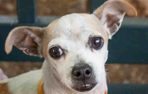 Pet of the Week: Cisco