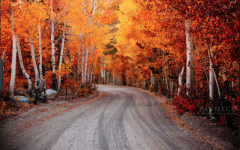 Autumn has come – Thanksgiving short story