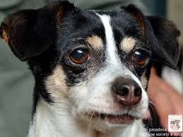 Bert the Dog