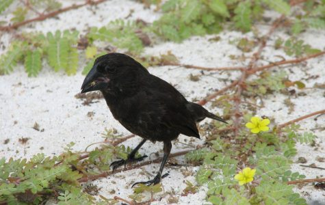 New Species found in Galapagos