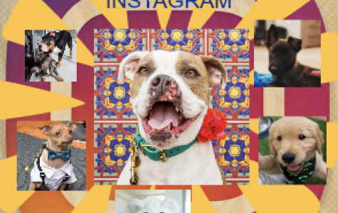 Famous Dogs of Instagram