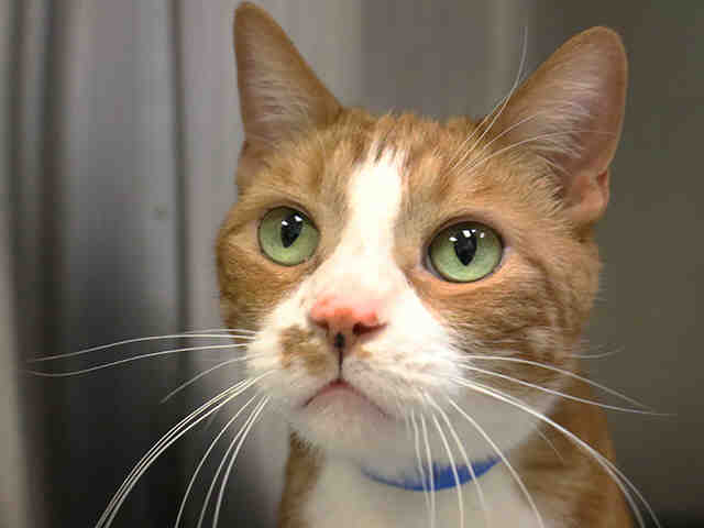 Pet of the Week: Chowder