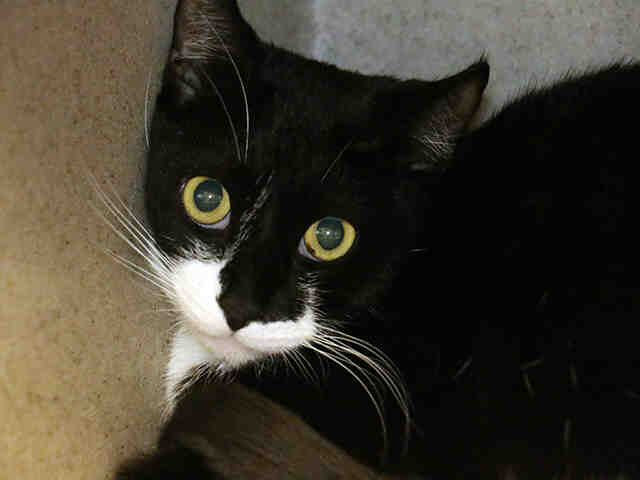 Pet of the Week: Cruiser the Cat