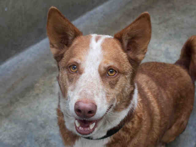 Pet of the Week: Clipper