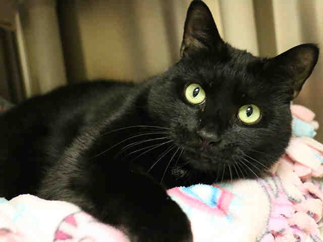 Pet of the Week: Meese the Cat