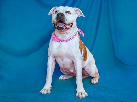 Pet of the week: Princess