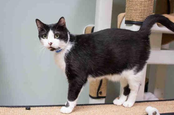 Pet of the Week: Daniel the Cat